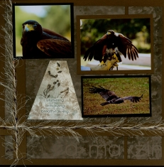 Birds of Prey Scrapbook Layout from Sketch