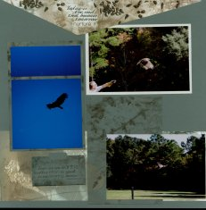 Birds of Prey Scrapbook Layout