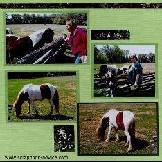 Magnolia Plantation Horses