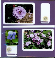 Norfolk Botanical Gardens Scrapbook Layout
