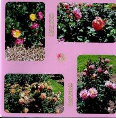 Norfolk Botanical Gardens Scrapbook Layout