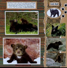 Yellowstone Park Scrapbook Layout & Embellishments