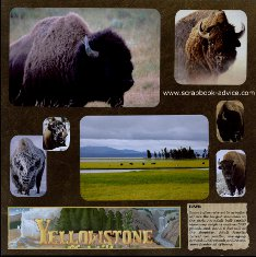 Yellowstone Scrapbook Layouts showing Buffallo in Lamar Valley