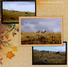 Yellowstone Park Scrapbook Layout showing the Deer in Full antler