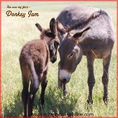 Custer State Park Scrapbook Layoutht of Donkeys in the Road