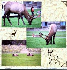 Yellowstone Park Scrapbook Layout & Embellishments