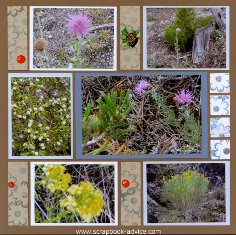 Yellowstone Park Scrapbook Layout showing various flowers groing in the Park