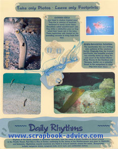 Aquarium Scrapbook Layout using fibers, tags and a shaker box