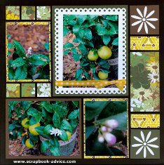 Mosaic Moments Page Kit Daisy'd with photos