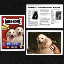 Canine Assistants Scrapbook Layout