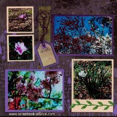 Magnolia Plantation Flowers