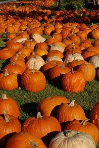 Halloween Scrapbook and Photo Tips