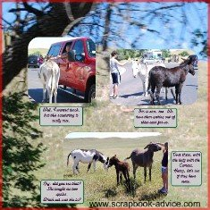Custer State Park Scrapbook Layout of Donkeys in the Road