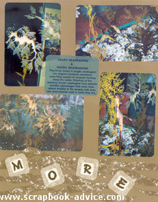 Aquarium Scrapbook Layout from Sketch