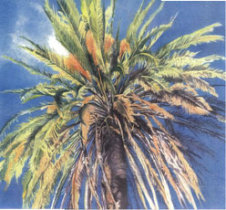 Scrapbook Paper Hawaiian Palms looking up into palm tree from below
