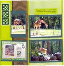 Zoo Africa Scrapbook Layout of Giraffe