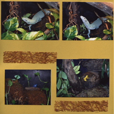 Zoo Africa Scrapbook Layout of  Lizards