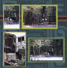 Zoo Africa Scrapbook Layout of Ostrich