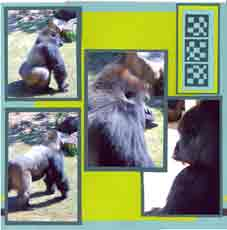 Zoo Africa Scrapbook Layout of Gorillas